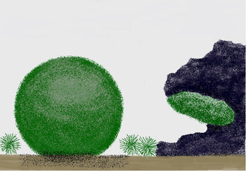 Marimo Moss Ball Cartoon