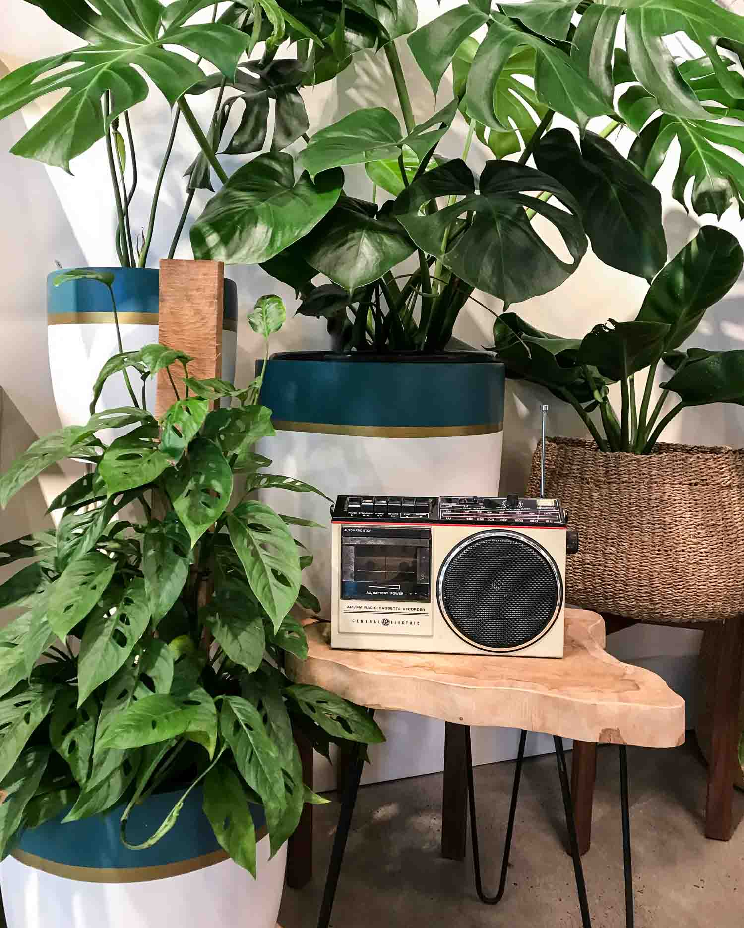Music and Plant Growth - Pistils Nursery