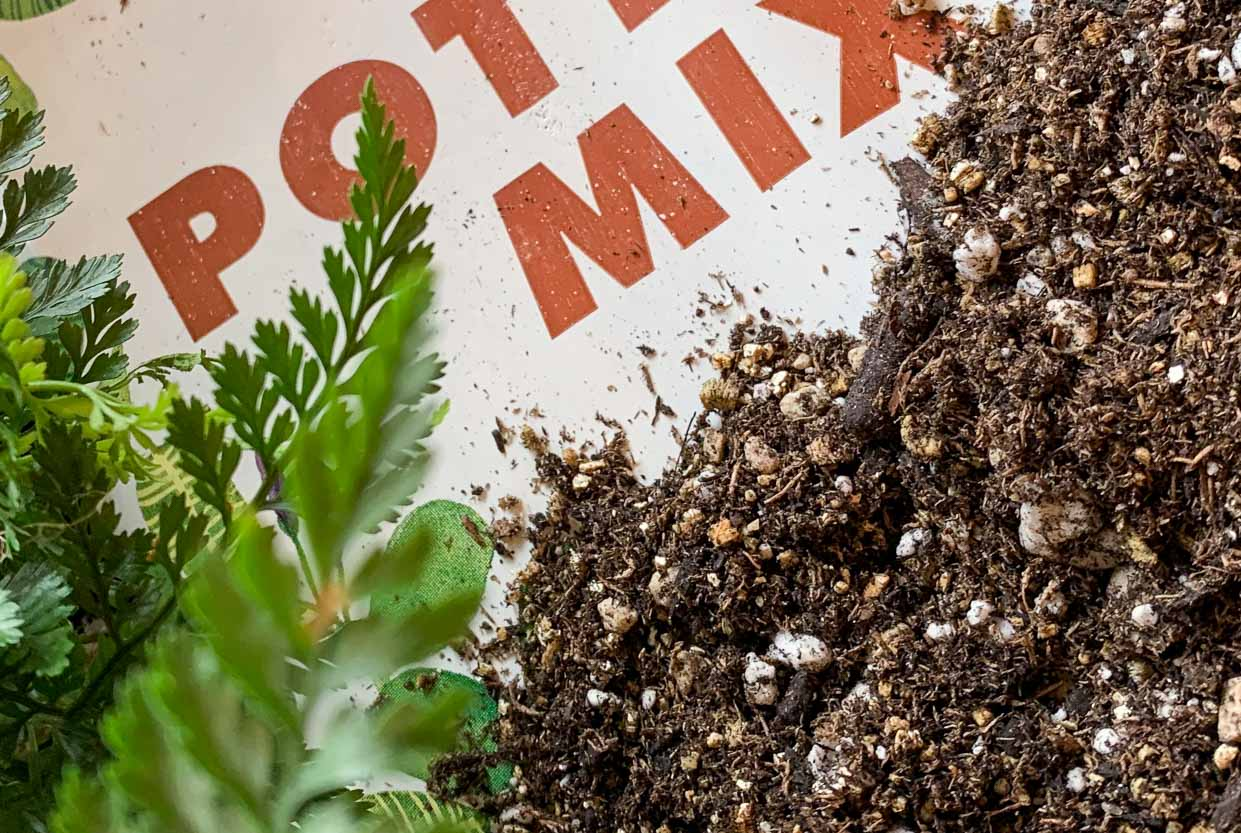 Recipes for Houseplant Health: Soil Substrates and Potting Mixes - Pistils Nursery