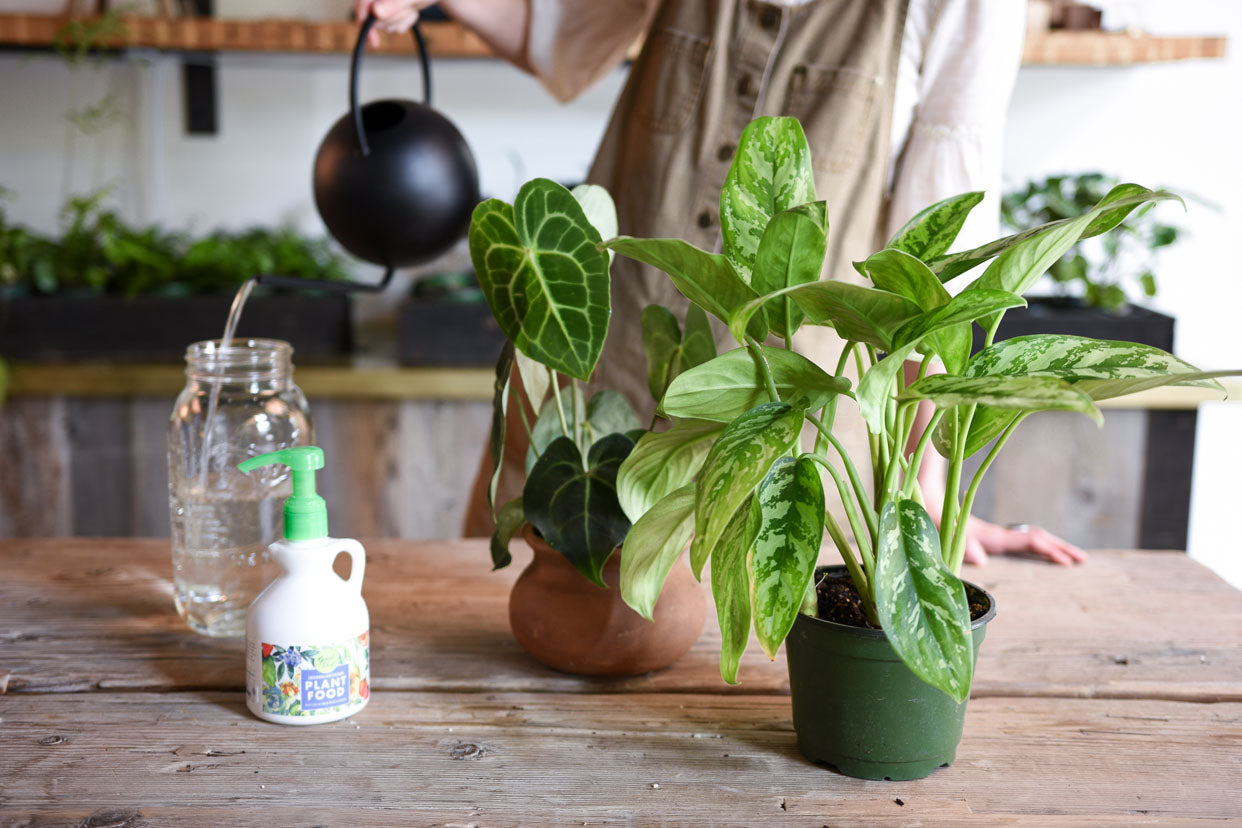 Spring Feeding: Houseplant Fertilizing 101 - Pistils Nursery
