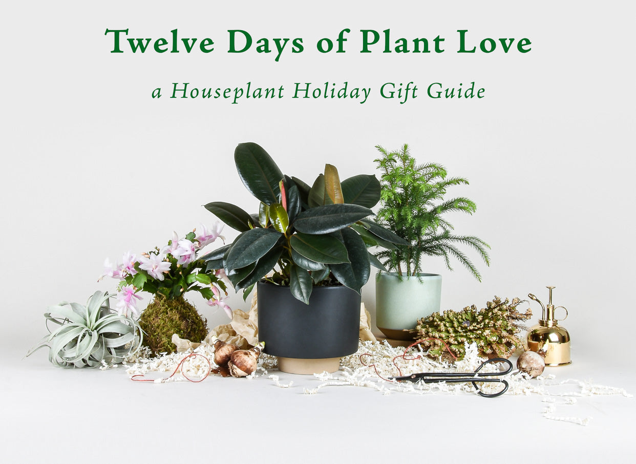 The Best Houseplant Gifts: A Holiday Gift Guide - Pistils Nursery
