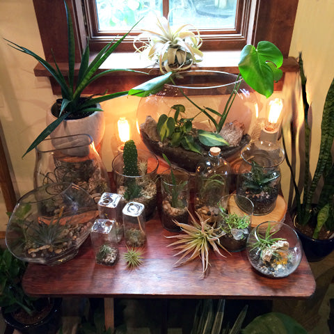 Aeriums and Terrariums at Pistils Nursery