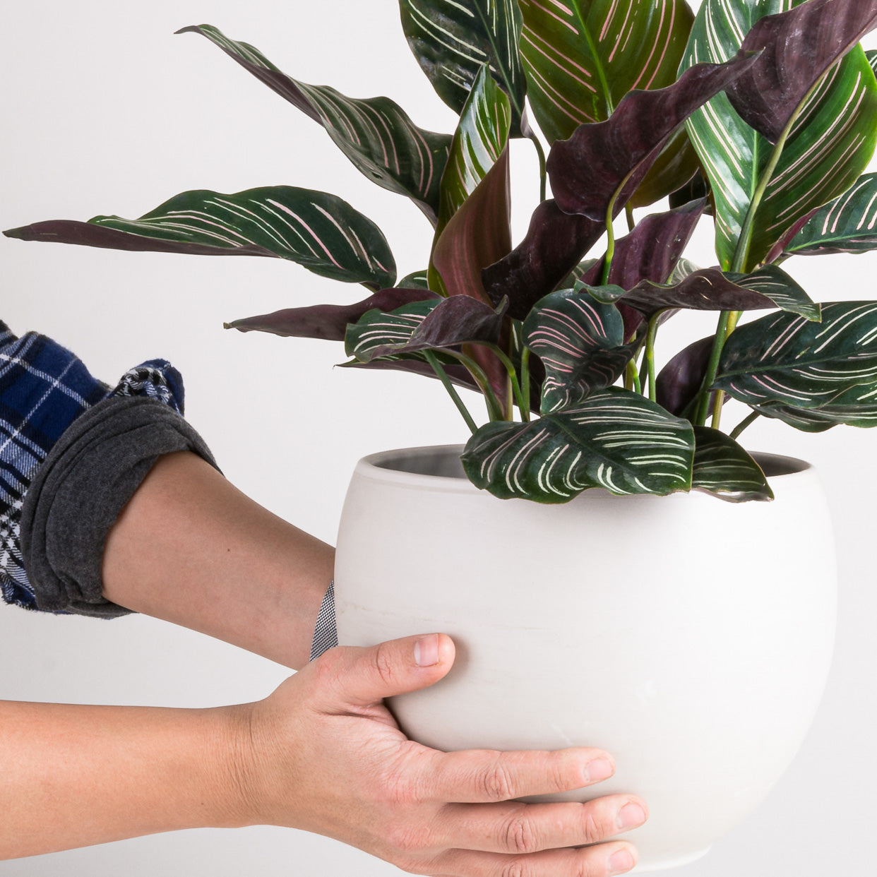 Turning Over a New Leaf: a Houseplant New Year's Tradition - Pistils Nursery