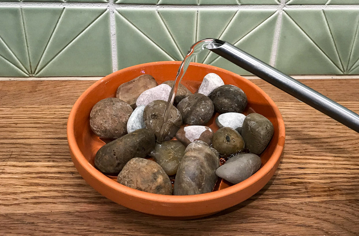 Humidity Hack: How to Make a Pebble Tray - Pistils Nursery