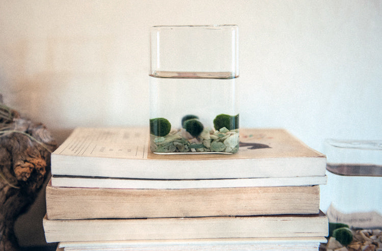 Marimo Moss Ball Aquariums