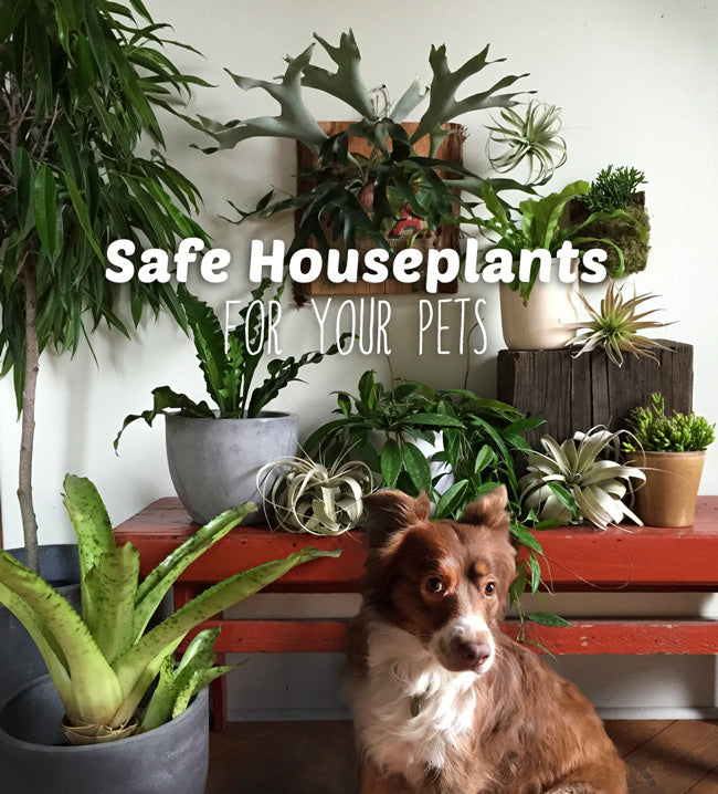 Plants And Pets Our 10 Favorite Pet Safe Indoor Plants And 7 To Avoid Pistils Nursery