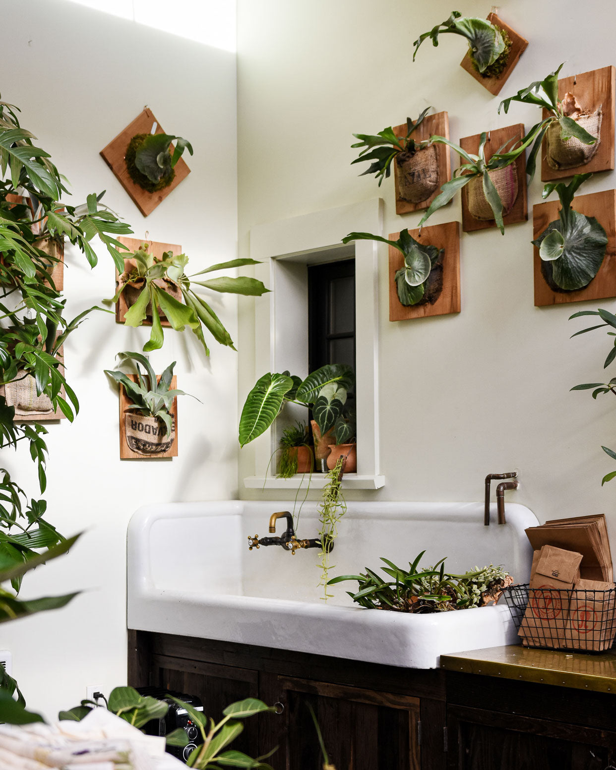 Staghorn Ferns and Anthuriums at Pistils Nursery in Portland