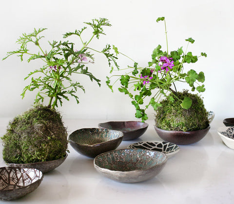 Scented Geranium Care: How to Grow Pelargonium Kokedama