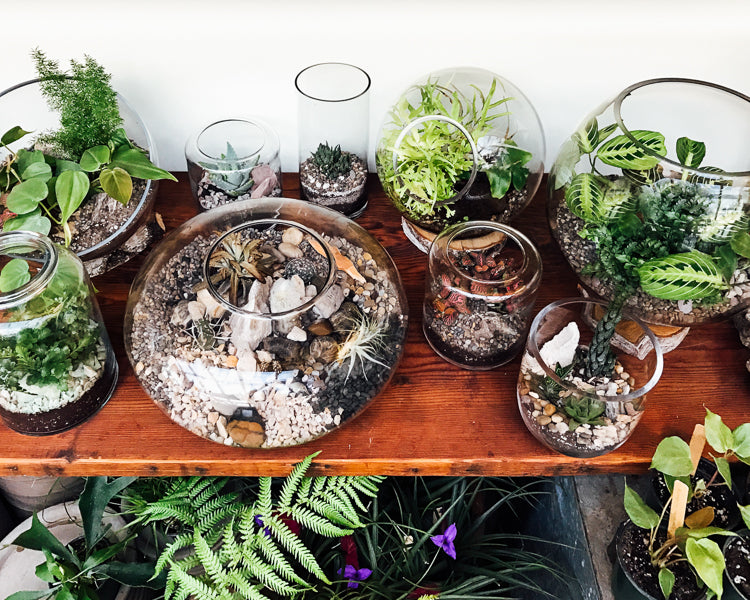 Terrarium Care How To Care For Terrariums With Succulents Cacti