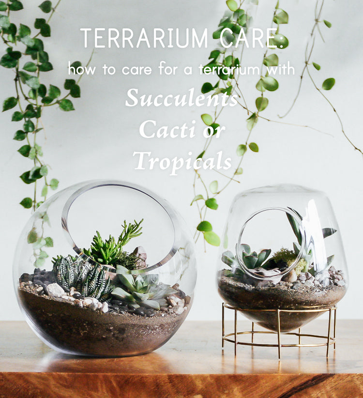 Terrarium Care How To Care For Terrariums With Succulents