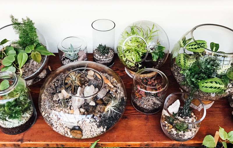 Terrarium Care: How To Care For A Terrarium with Succulents, Cacti and Tropical Plants