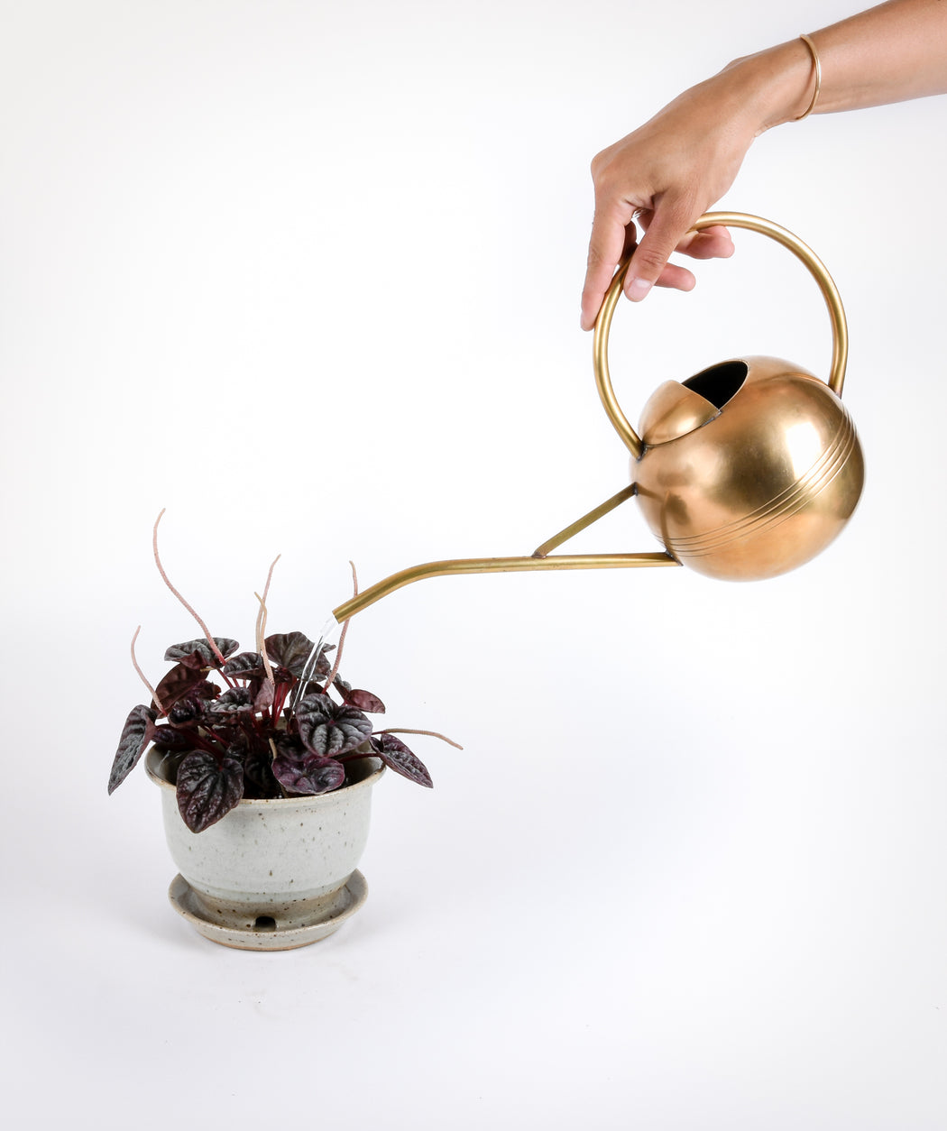 Brass Watering Can - Pistils Nursery
