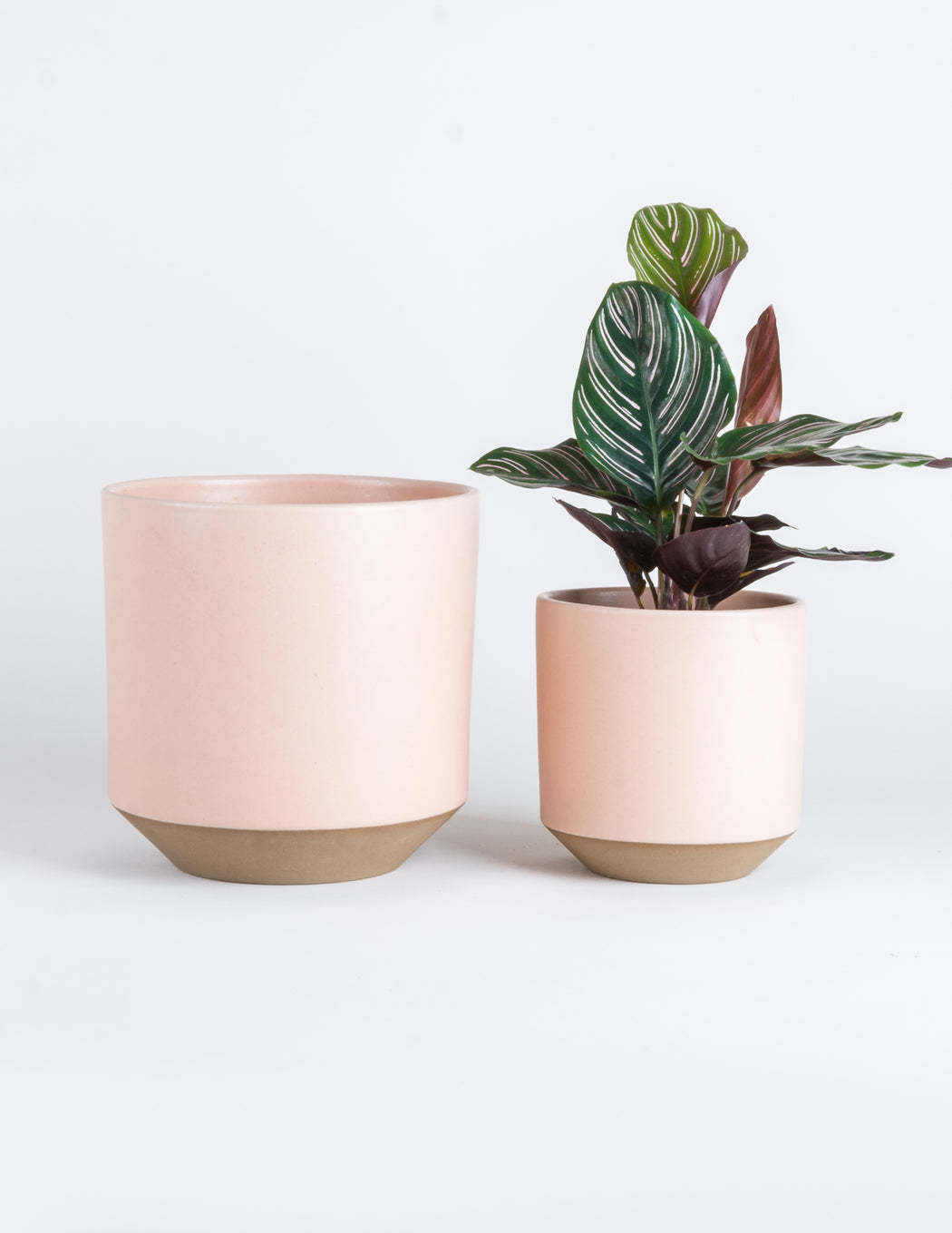 Coco Planter - Satin Peach - Pistils Nursery