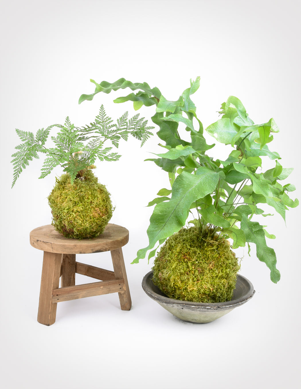 Footed Fern Kokedama - String Garden - Pistils Nursery
