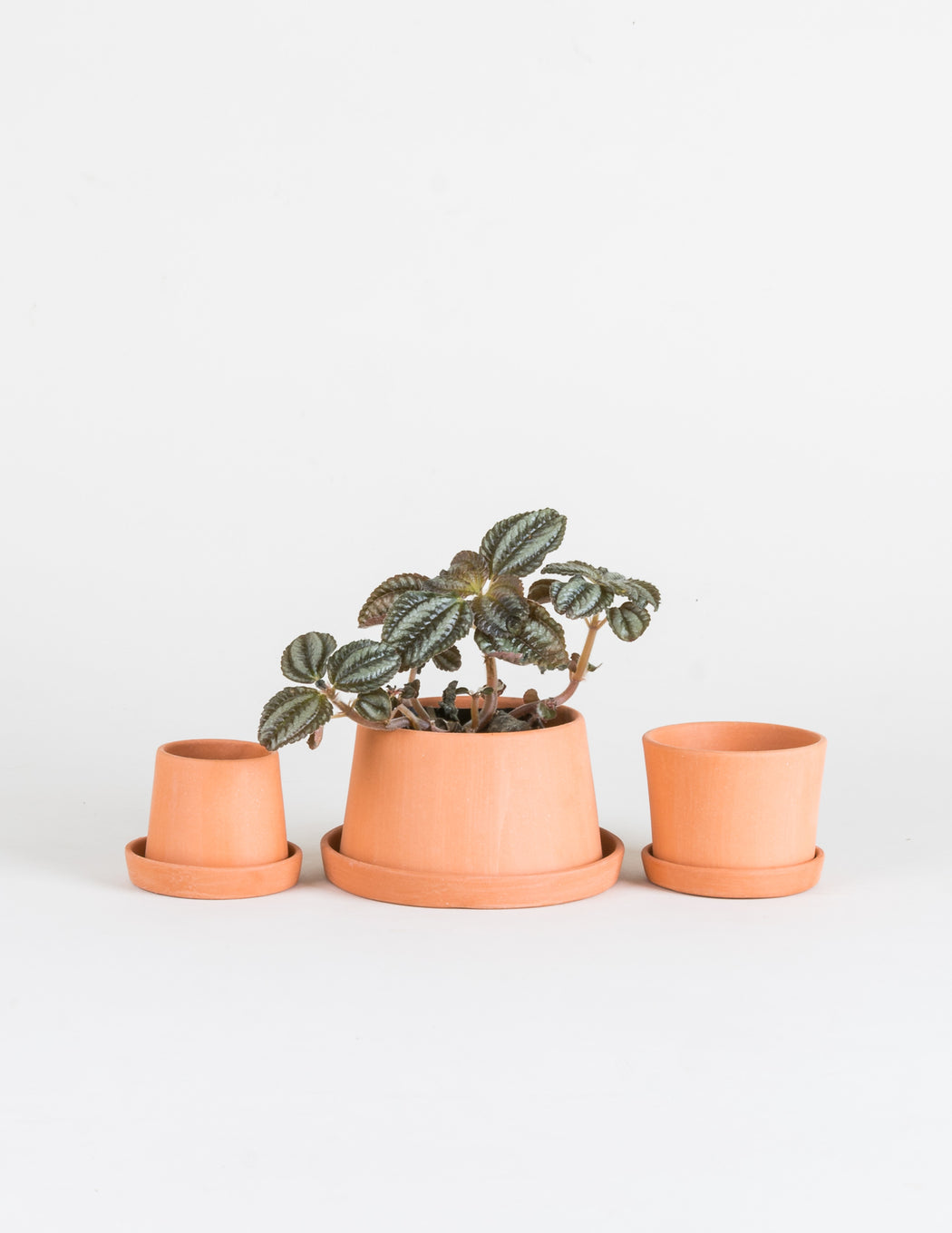 MIchiko Shimada Terracotta Mini Planter Set - Pistils Nursery - handmade unglazed terra cotta