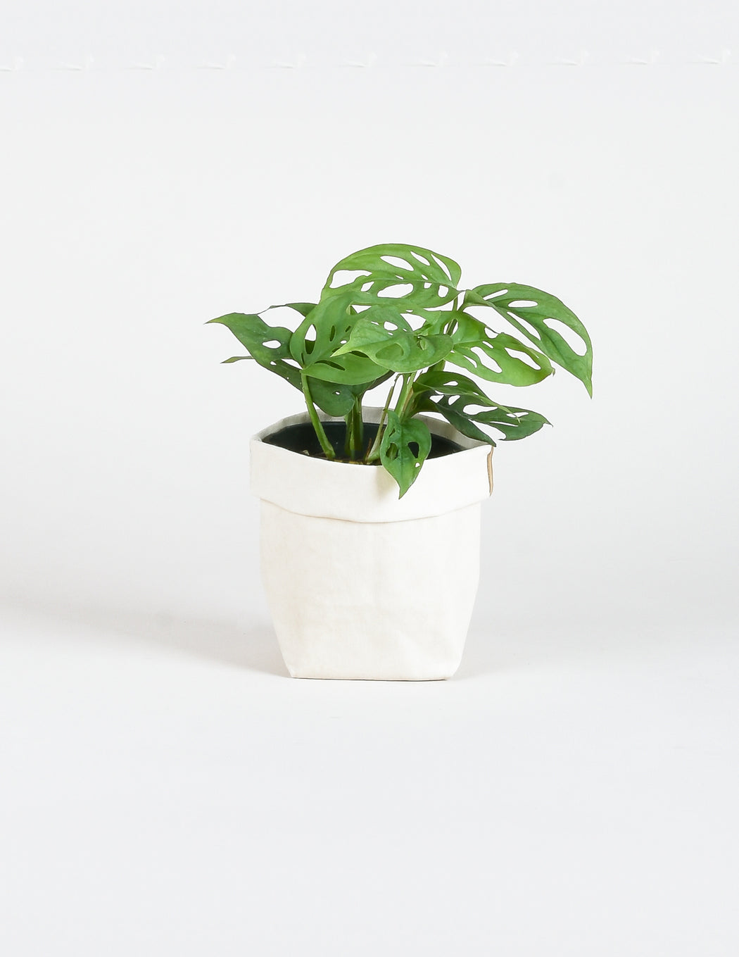 Soft Planter in Cream - Perennity Designs - Pistils Nursery