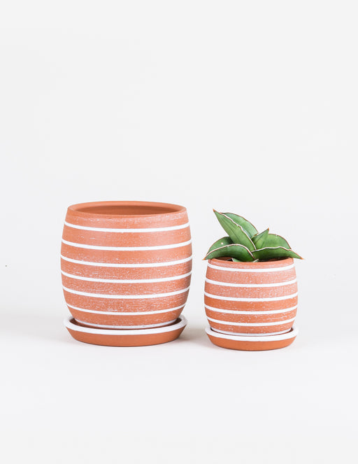 Striped Planter - Sissy Moon - Pistils Nursery