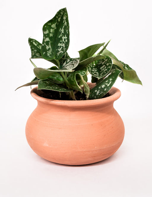 Terracotta 'Olla' Pot