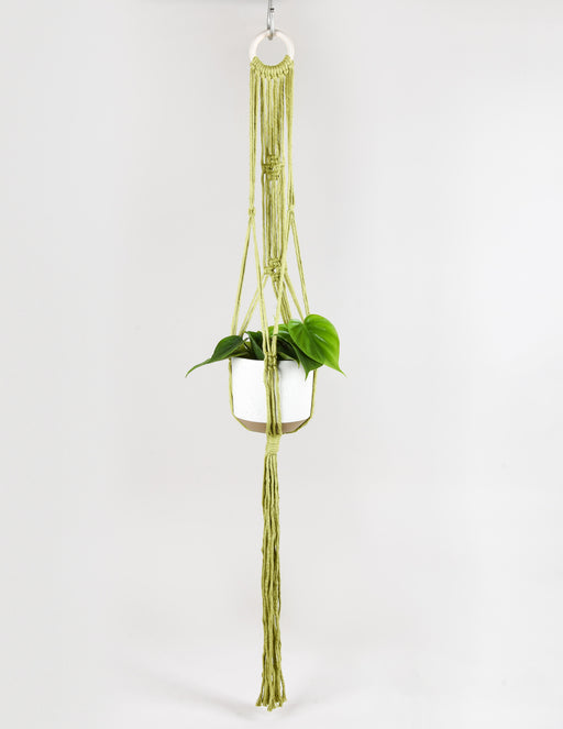 Philodendron hederaceum in green macrame