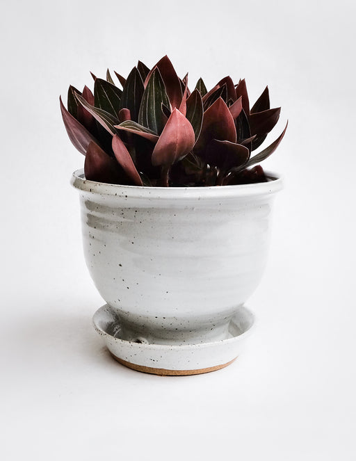 Hand Thrown Ceramic Planter - White Speckle - Pistils Nursery
