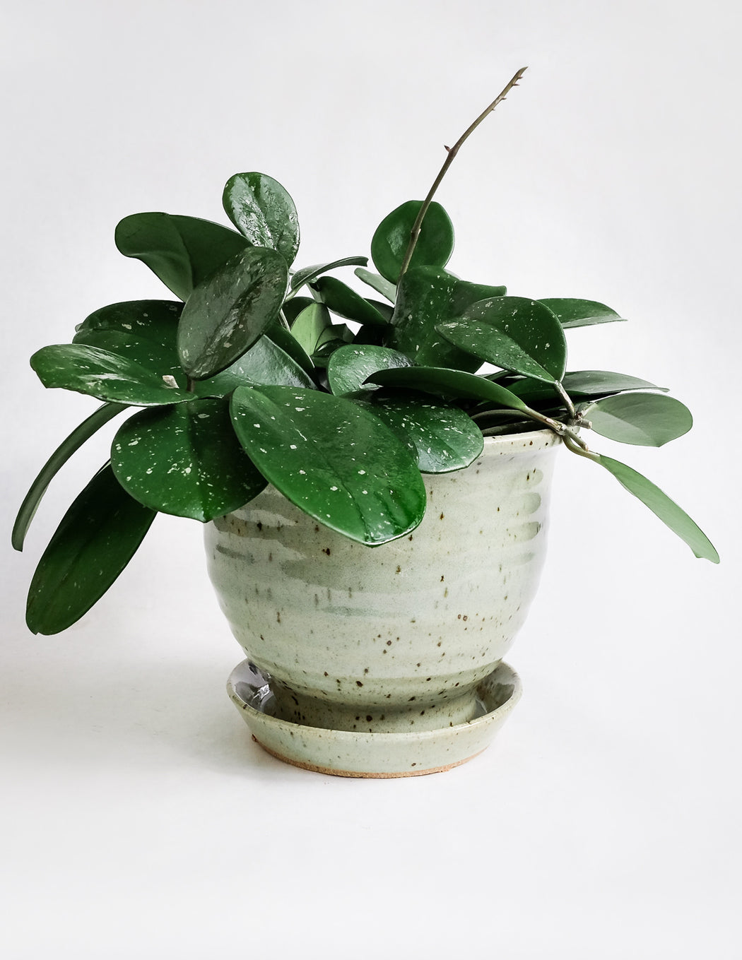 Hand Thrown Ceramic Planter - Celadon - Pistils Nursery