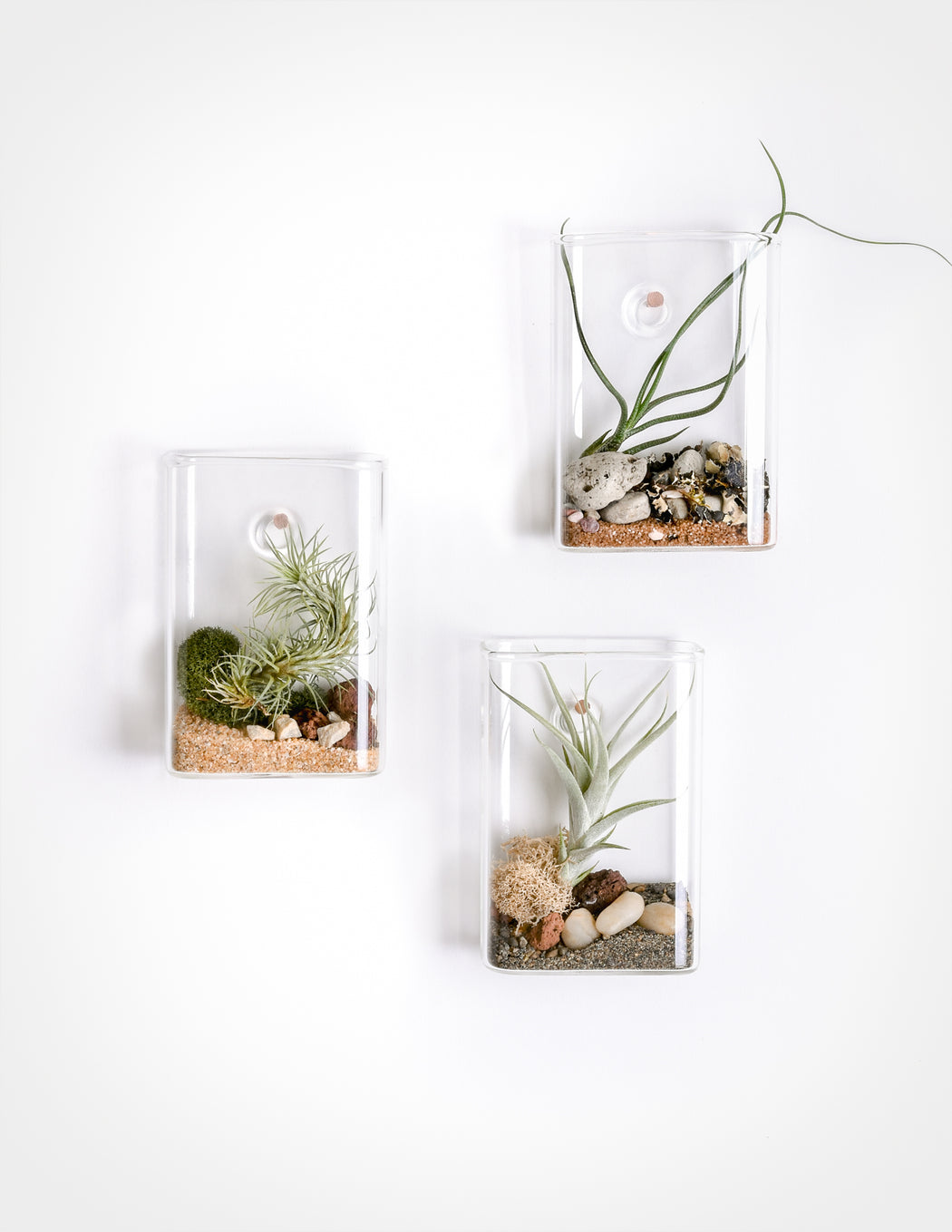 Pocket Aerium - Wall Hanging Tillandsia Terrarium - Pistils Nursery Air Plants