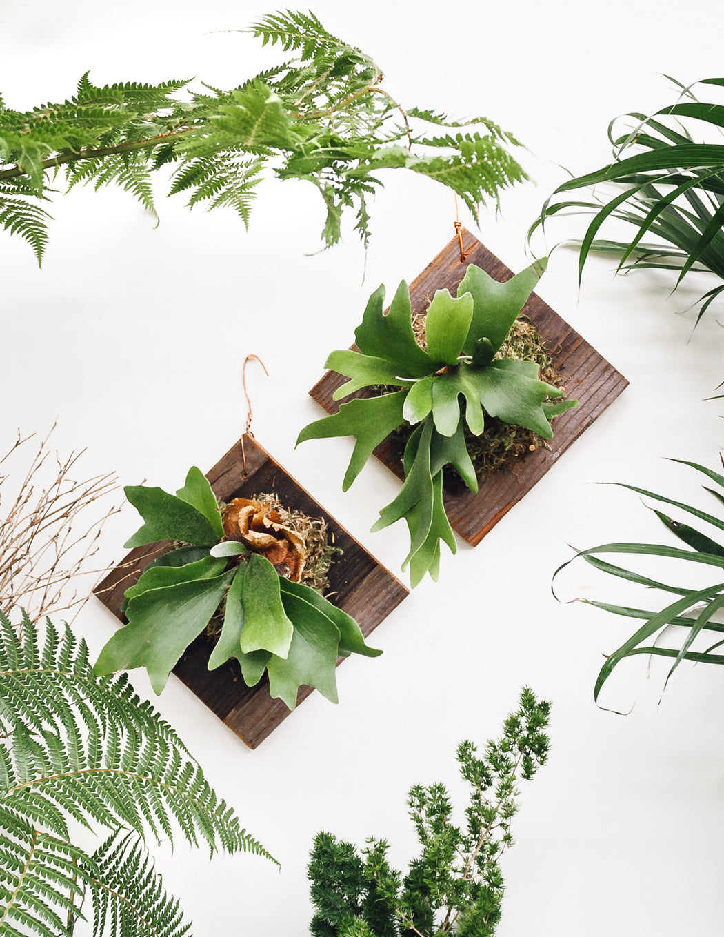 Staghorn Fern Mounting Workshop