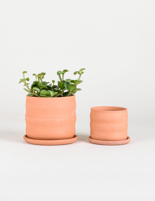 Wavy Terracotta Planter - The Art Department - Pistils Nursery