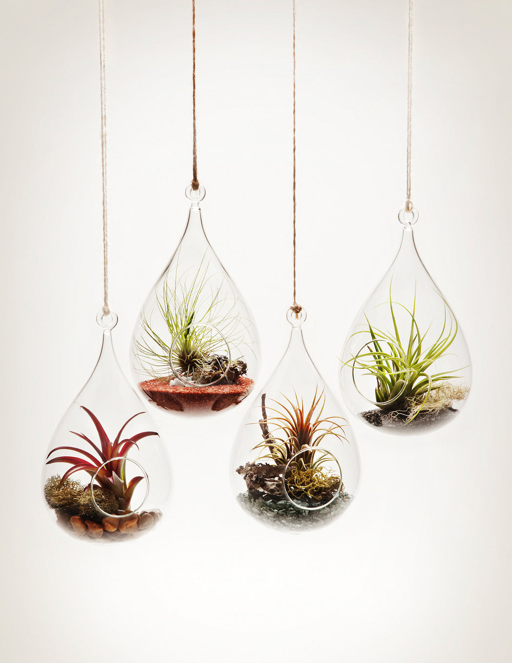 Hanging Aeriums - Wren's Nest shape with tillandsia air plants