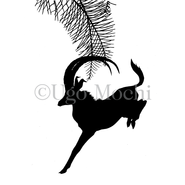 African Sable Antelope No.2