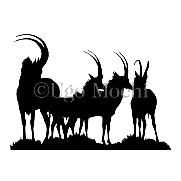 African Sable Antelope No.1
