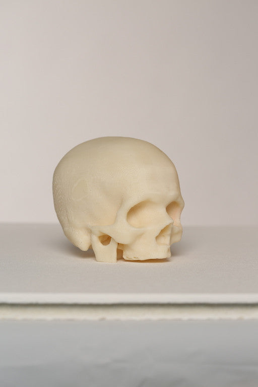 Skull in plastic