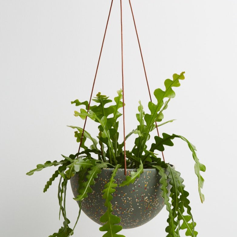 Dome Hanging Planter - Terrazzo Agave