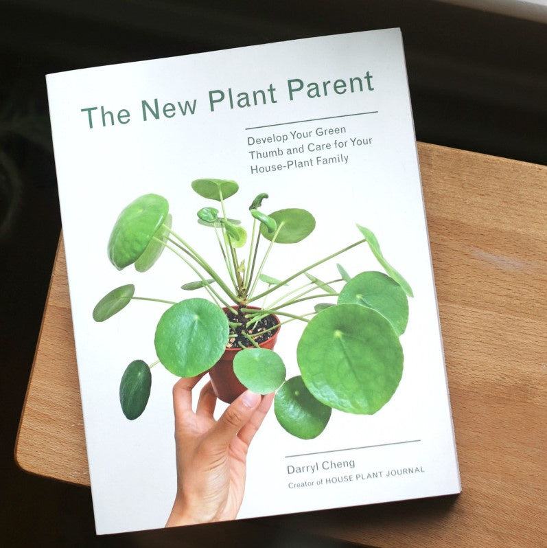 The New Plant Parent – Gypsy and the Bowerbird