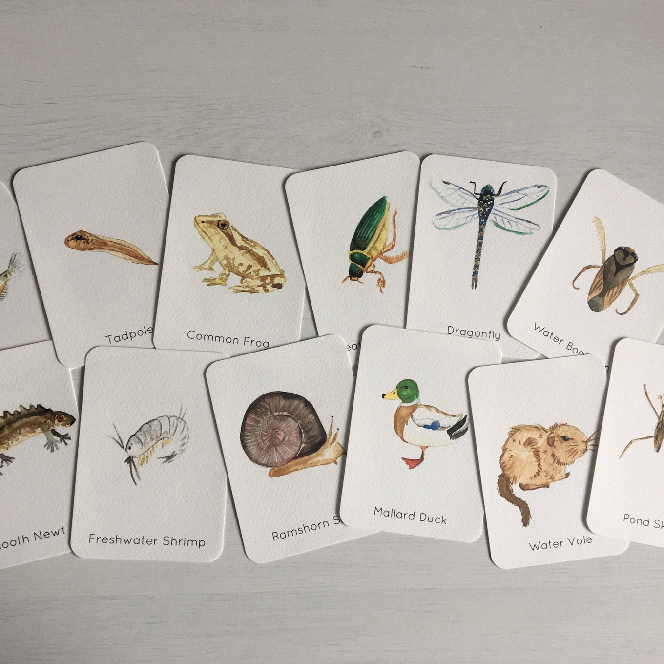 Flashcards | Pond Life