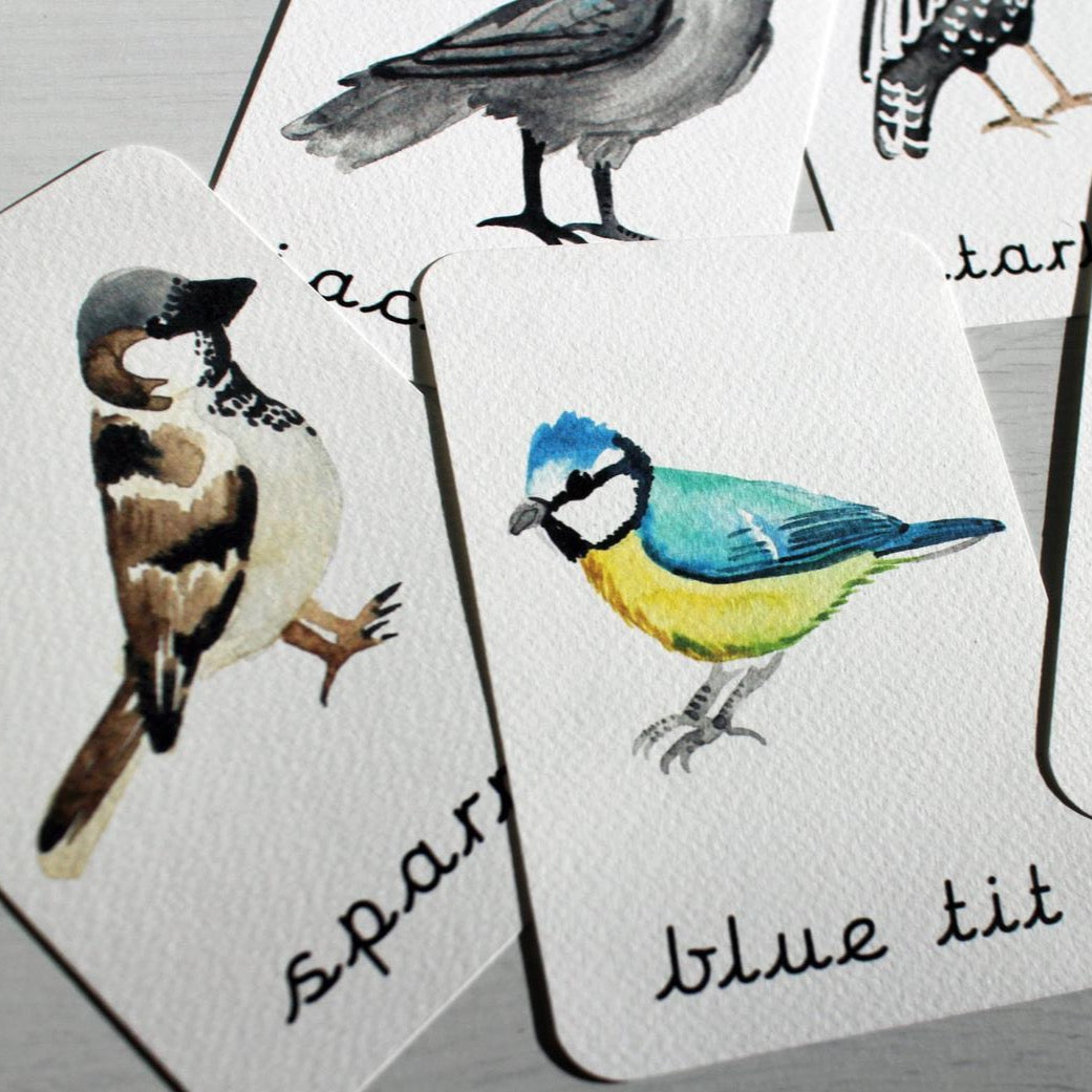 Mini Tin Collection Flashcards | Bird