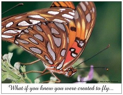 What if You Knew Butterfly Note Card 5/Pack Set