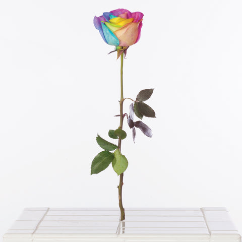 Virginia Poundstone <br> Rainbow Rose, 2015