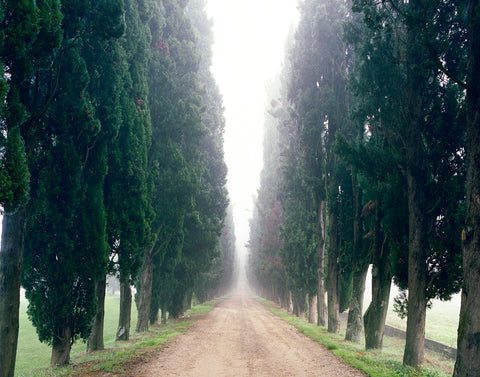 Boulevard of Cypress