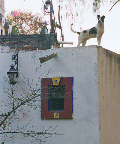 Dog on Roof 2