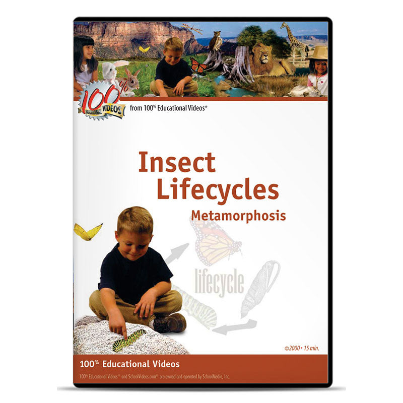 Insect Lifecycles: Metamorphosis