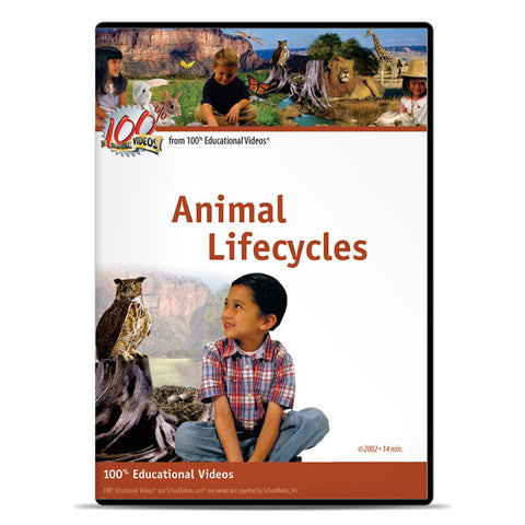 Animal Lifecycles