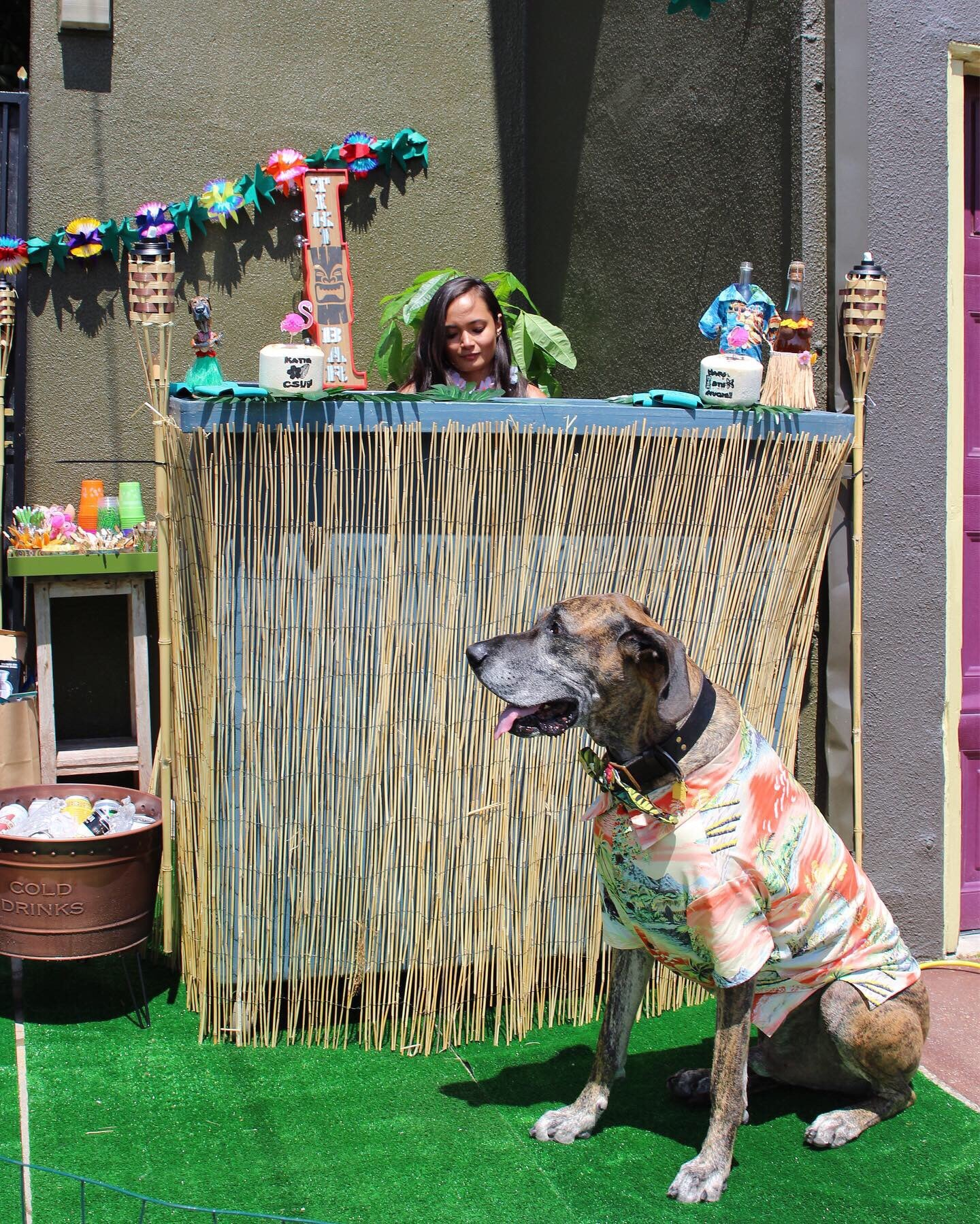 Dog Birthday Party Ideas | Luau Themed Parties for Dogs