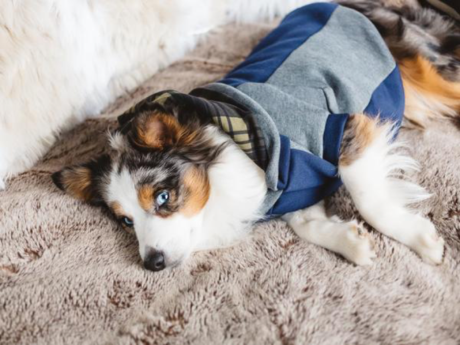 Top 10 Dog Clothing Brands with Transparent Manufacturing