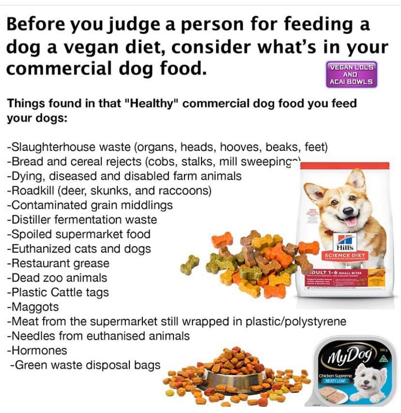 Why feed your dog vegan dog food?
