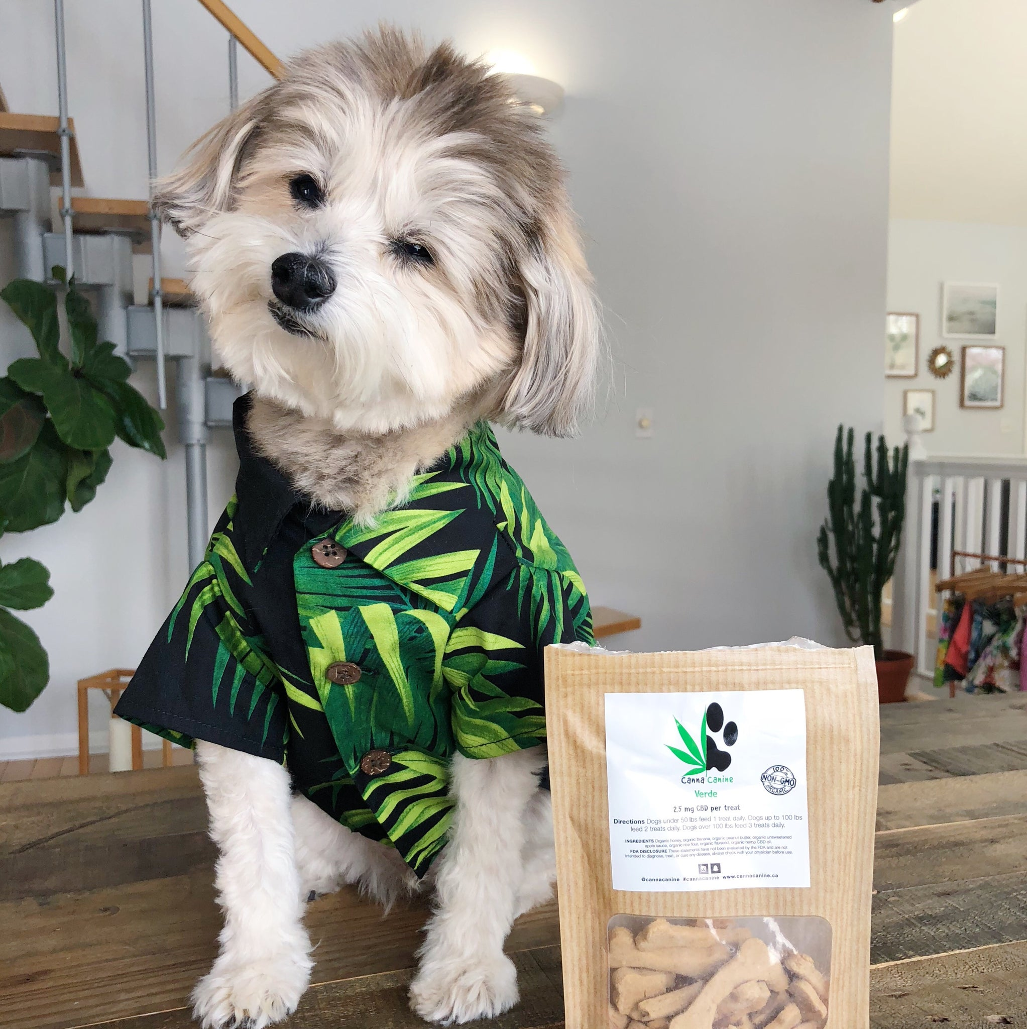 Hemp Dog Treats | Our Review of CBD for Dogs by Dog Threads
