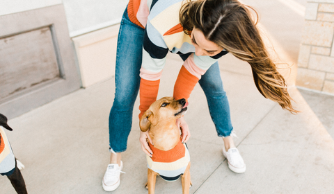 4 Ideas to Treat Your Dog-Loving Friend