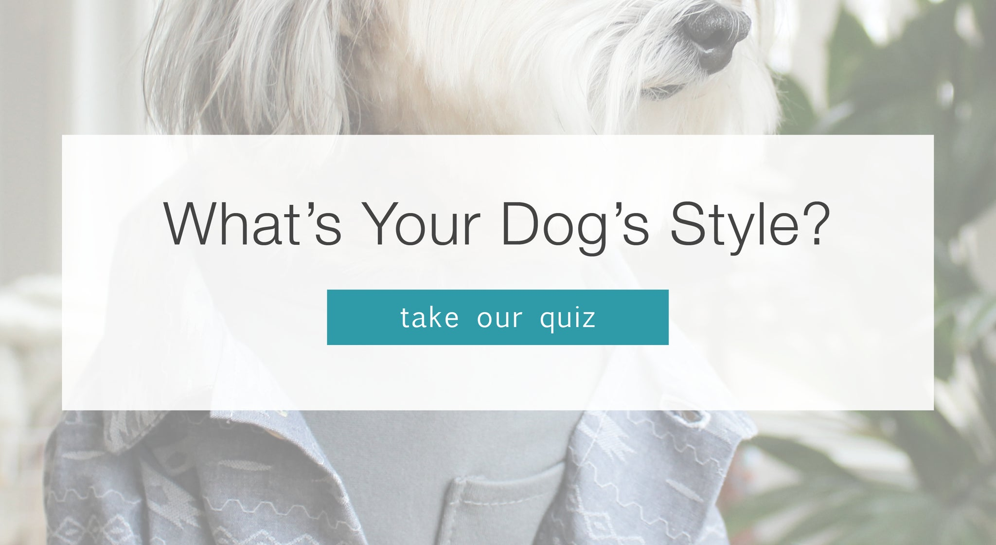 What's Your Dog's Style Quiz by Dog Threads