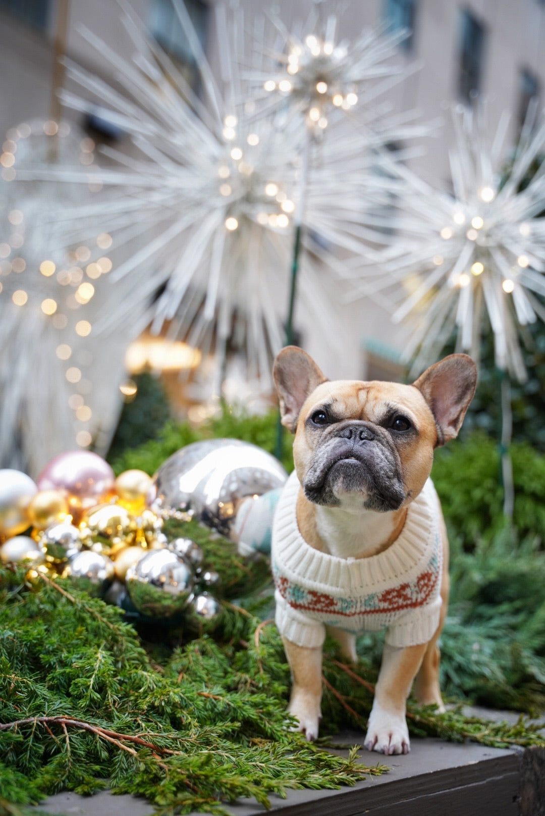 Christmas Holiday Sweaters and Gifts for Dogs and People