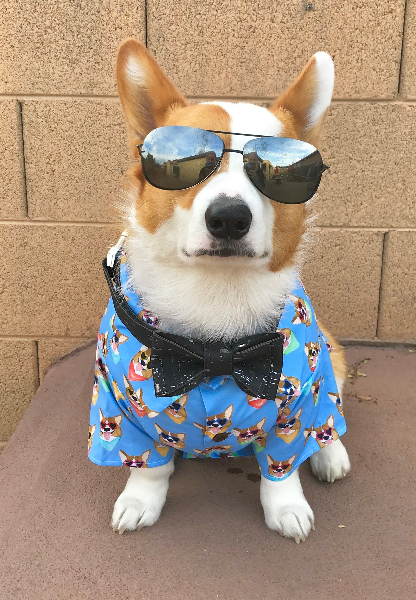 Healthy Spot x Dog Threads | Corgi Dog Shirt